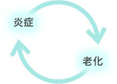 炎症と老化のサイクル