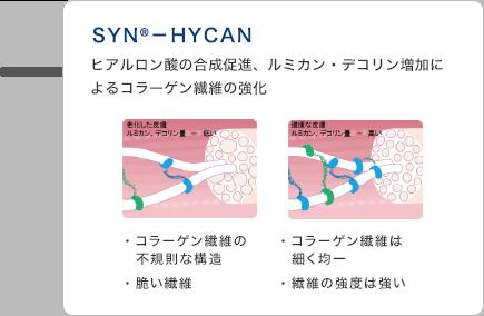 SYN®-HYCAN ヒアルロン酸の合成促進 ルミカン・デコリン増加によるコラーゲン繊維の強化